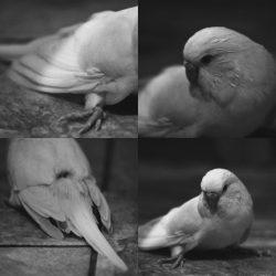 Anita-Forde-Eg-13-Bird-Photography-in-Black-and-White