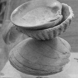 Caoimhe-Farrell-Shells-