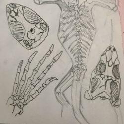 Catalina-Vesca-10._Reptile_Skeletons._Pencil_Pen