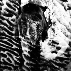 Ciara-Davitt-3-Fungilicious,-Mixed-Media-+-Photoshop