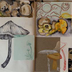 Gemma-Rose-Varszegi-1.-Mixed-Media-Mixed-Mushroom
