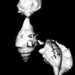 Lee-Barrrett-Woods-4,Shells,Photography