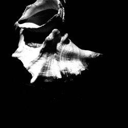 Lee-Barrrett-Woods-5,Stacked_Shells,Photography