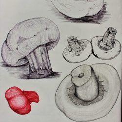 Nodee-Mekhola-10.-_Study-Of-Mushrooms-Pt.-1_-Pencil-And-Ink_
