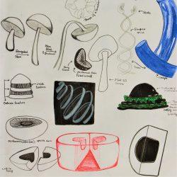 Nodee-Mekhola-12.-_Morphing-Mushrooms-Pt.-2_.-Ink-_-Coloured-Pencils