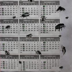 Nodee-Mekhola-2.-_Collage-Of-Flies-On-A-Bin-Calendar_.-Paper_