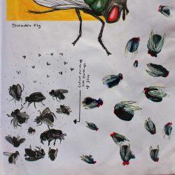Nodee-Mekhola-3.-_Study-Of-Flies_.-Mixed-Media_