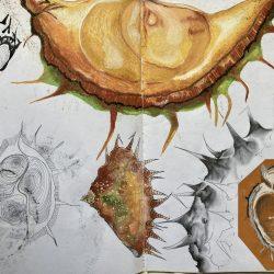 Sabrina-Dunne-16.-Chestnut-Study---Oil-Pastel,-Ink,-Gouache-