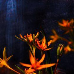 Valeria-Schipschi-13.-Mirroring-Filthiness.Photography