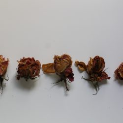 Valeria-Schipschi-16.-Dehydrated-Roses-.Photography